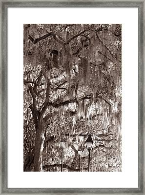 Dripping Feathers Framed Print by Jennifer Apffel
