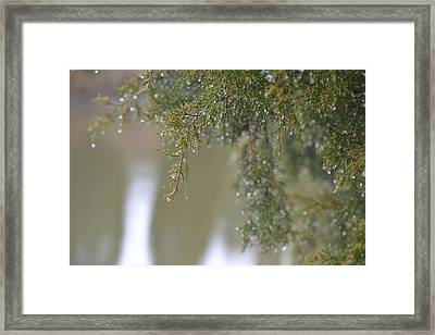Framed Print featuring the photograph Dripping Jewels by Mary Zeman
