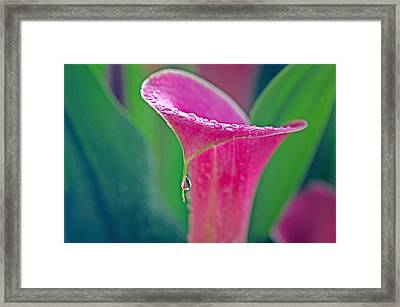 Dripping Framed Print by Joan Herwig