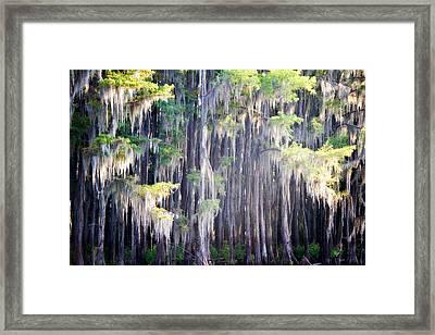 Dripping Moss Framed Print