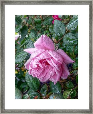 Dripping Pink Framed Print by Linda Unger