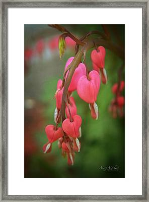 Dripping With Love Framed Print by Mary Machare