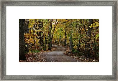 Drive Through The Woods Framed Print