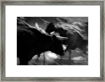 Driven Framed Print by Fred Lassmann