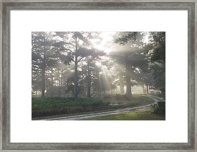 Driveway To Paradise  Framed Print