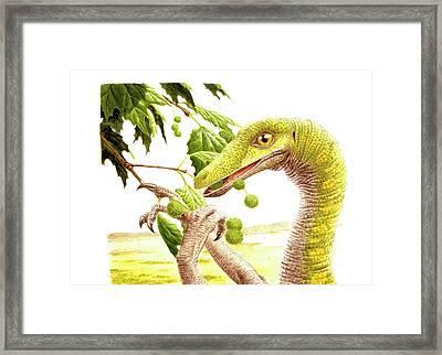 Dromiceiomimus Dinosaur Framed Print by Deagostini/uig