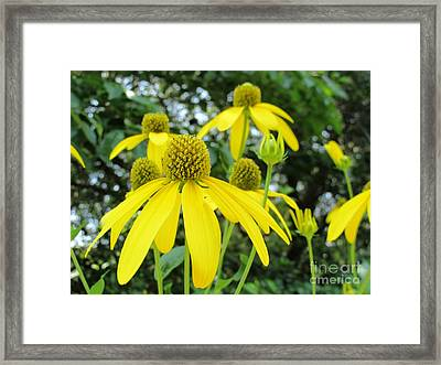 Drooping Petals Framed Print