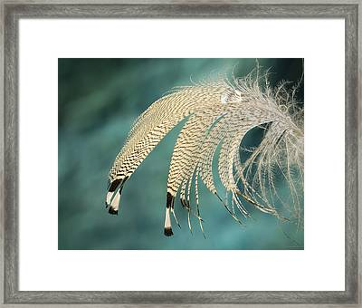 Droopy Feather Framed Print