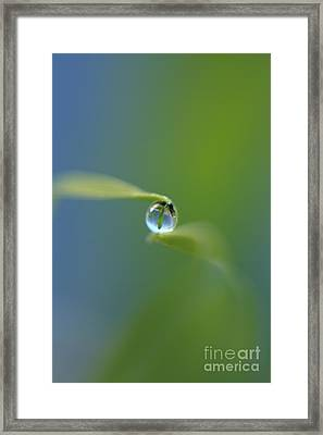 Drop 2 Framed Print by Rebeka Dove