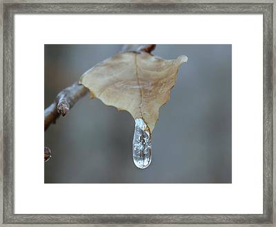 Drop Of Ice Framed Print