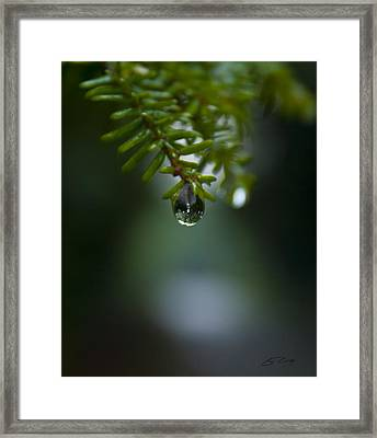 Drop Of Life In The Woods Framed Print by Ed Cilley