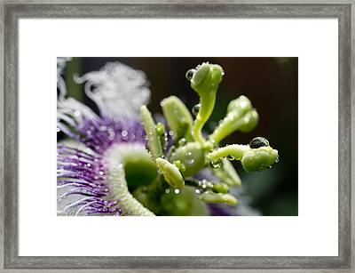 Drop Of Passion Framed Print by Priya Ghose