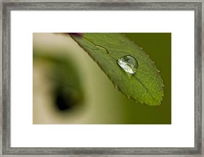 Drop Of Water Framed Print by Jonathan Davison
