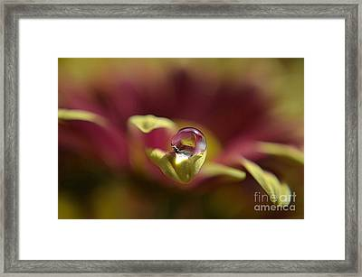 Drop On Petal Framed Print by Michelle Meenawong