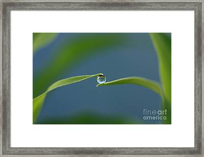 Drop Framed Print by Rebeka Dove