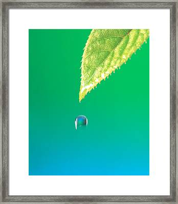 Droplet Falling From Green Leaf Framed Print by Panoramic Images