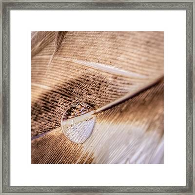 Framed Print featuring the photograph Droplet On A Quill by Rob Sellers