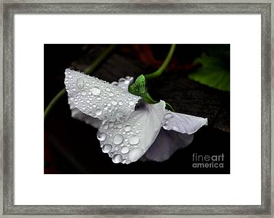 Droplets 2 Framed Print