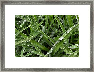Droplets 5 Framed Print