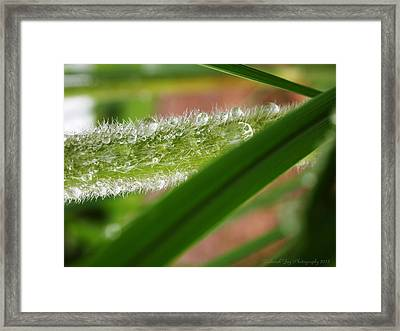 Framed Print featuring the photograph Droplets Of Life by Deborah Fay