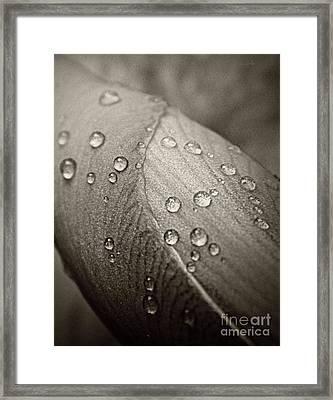 Droplets On An Iris Bud Framed Print
