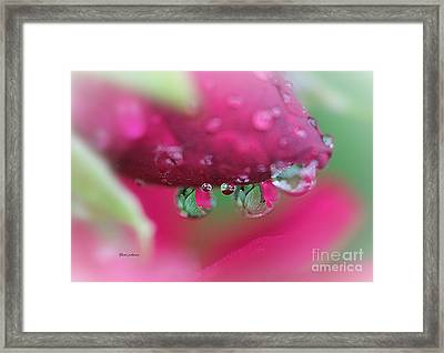 Droplets On The Rose Framed Print by Yumi Johnson