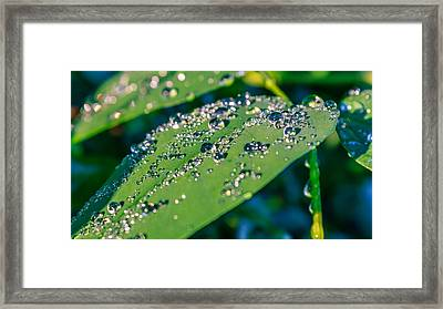 Framed Print featuring the photograph Droplets by Rob Sellers