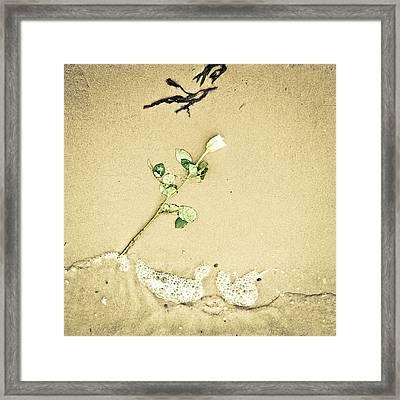 Dropped Flower Framed Print by Tom Gowanlock