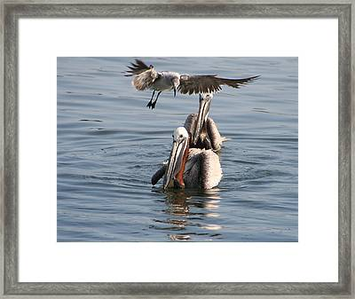 Dropping In For Lunch Framed Print by Mariarosa Rockefeller