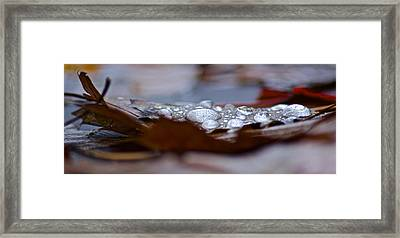Drops Framed Print by Jill Laudenslager
