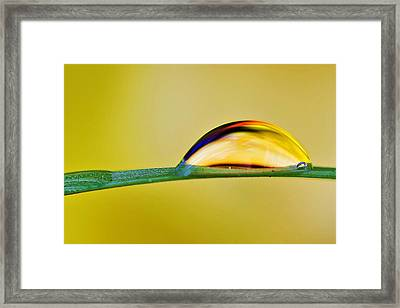 Drops Of Abstract II Framed Print by Gary Yost