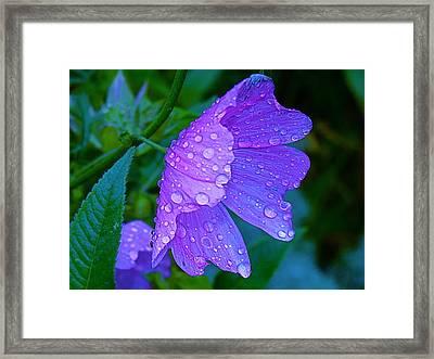 Drops Of Delight Framed Print