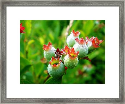 Framed Print featuring the photograph Drops Of Hope by Zinvolle Art