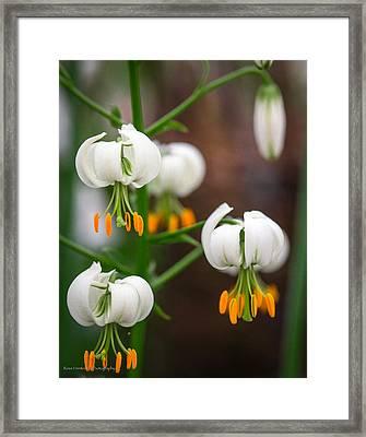 Drops Of Spring Framed Print by Ross Henton