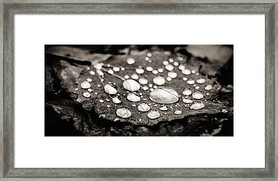 Framed Print featuring the photograph Drops On Fallen Leaf by Arkady Kunysz