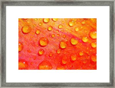 Drops On Flower Petals Framed Print by Tommytechno Sweden