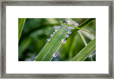Framed Print featuring the photograph Drops On Grass by Rob Sellers
