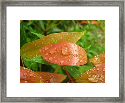 Drops On Leave Framed Print by Michelle Meenawong