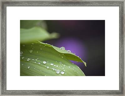 Drops Framed Print by Thomas Glover