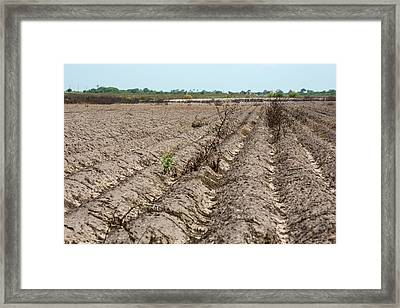 Drought-affected Farm Field Framed Print by Jim West