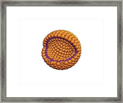 Drug Delivery Liposome Framed Print by Tammy Kalber & Simon Richardson, Ucl Cabi