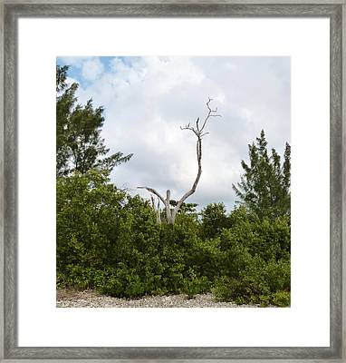 Framed Print featuring the photograph Druid Dance by Amar Sheow
