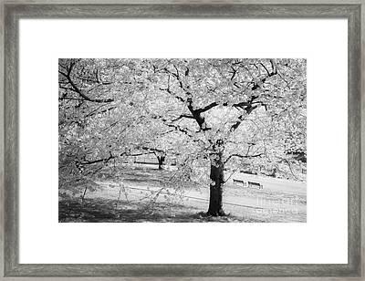 Druid Hill Park Spring Framed Print