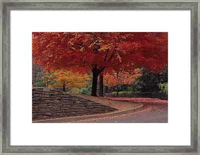 Druid Park-baltimore -- Maryland II Framed Print