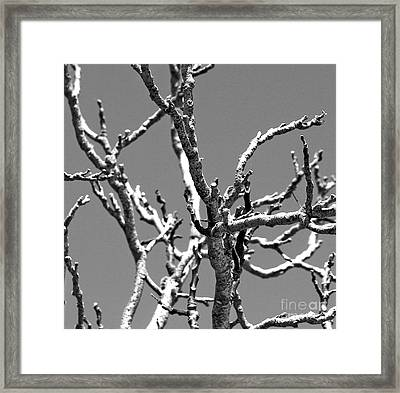 Dry Branches Framed Print