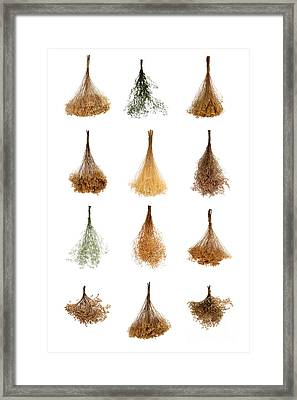 Dry Flowers Collection Framed Print