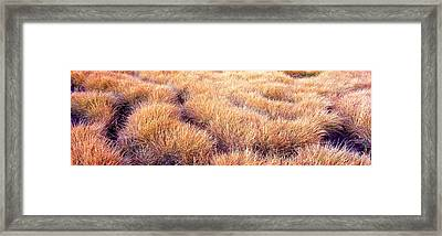 Dry Grass In A National Park, South Framed Print by Panoramic Images