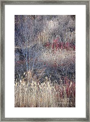 Dry Grasses And Bare Trees Framed Print