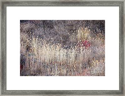 Dry Grasses And Bare Trees In Winter Forest Framed Print