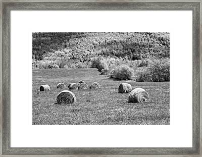 Dry Hay Bales In Maine Farm Field Framed Print